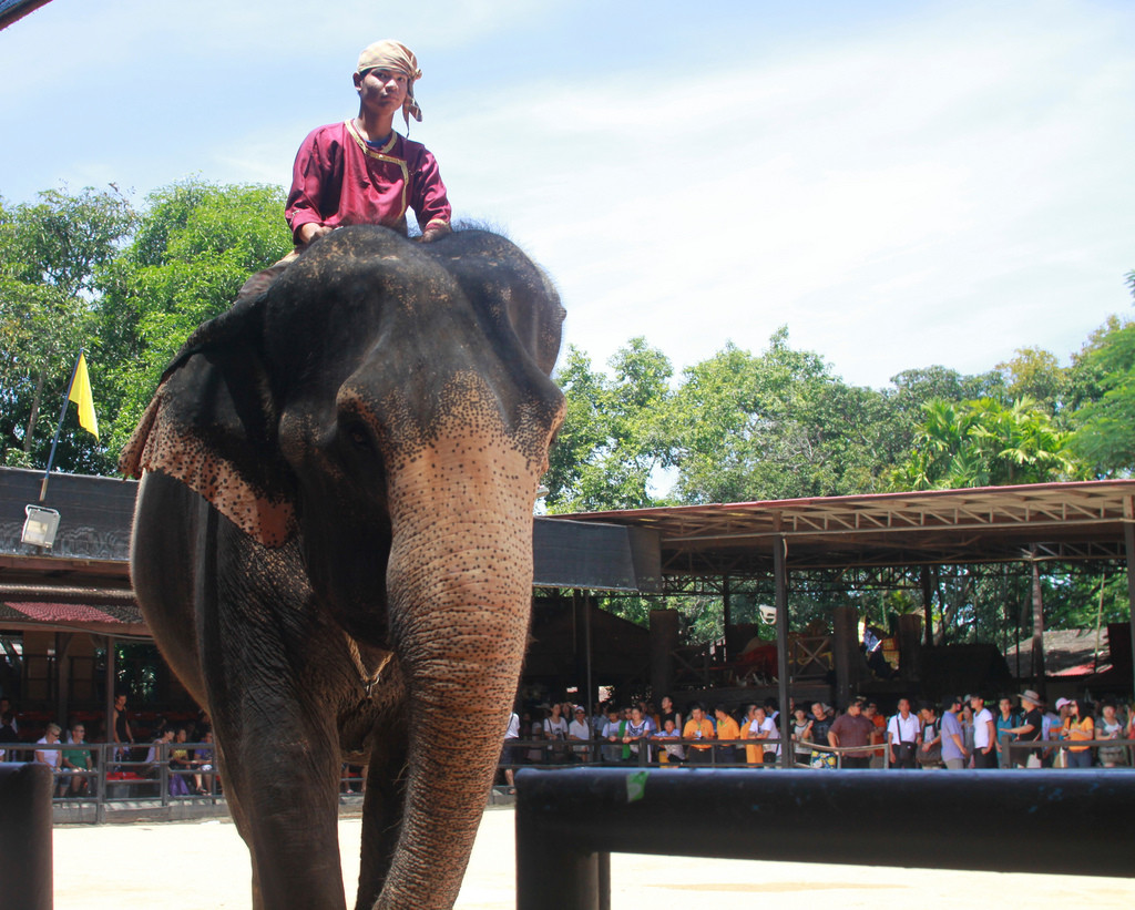 elephant thailand - thailand luxury tour